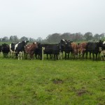 March grazing near Preston